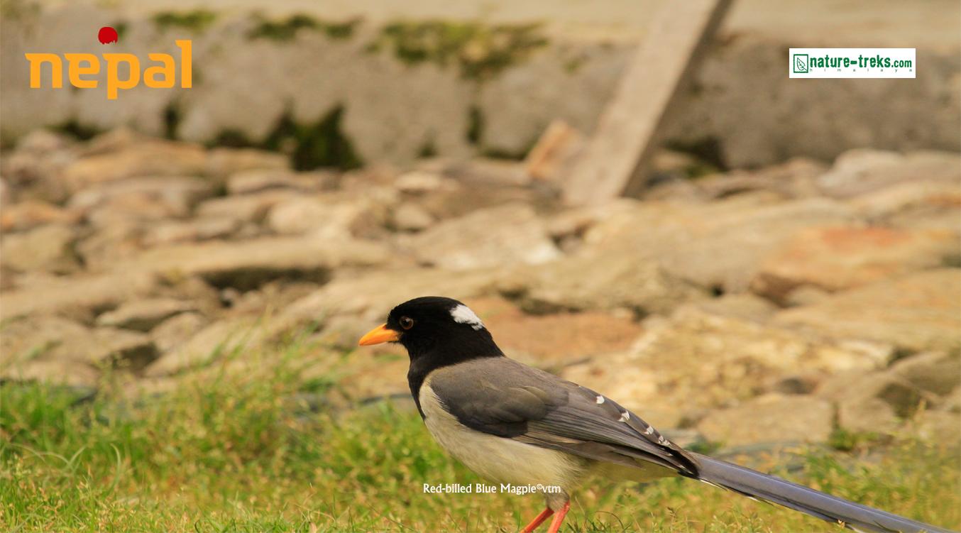 Birding holiday