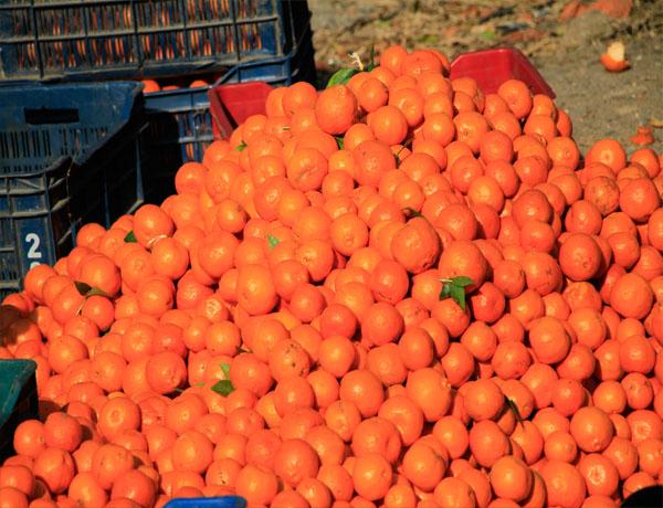 Nepal Maithan Orange