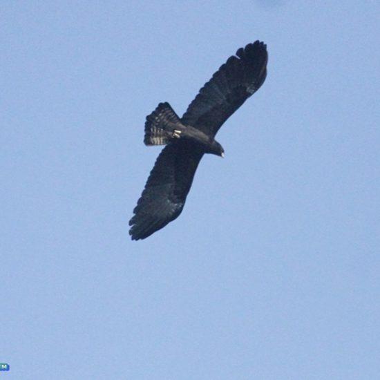 Birding @Haibung